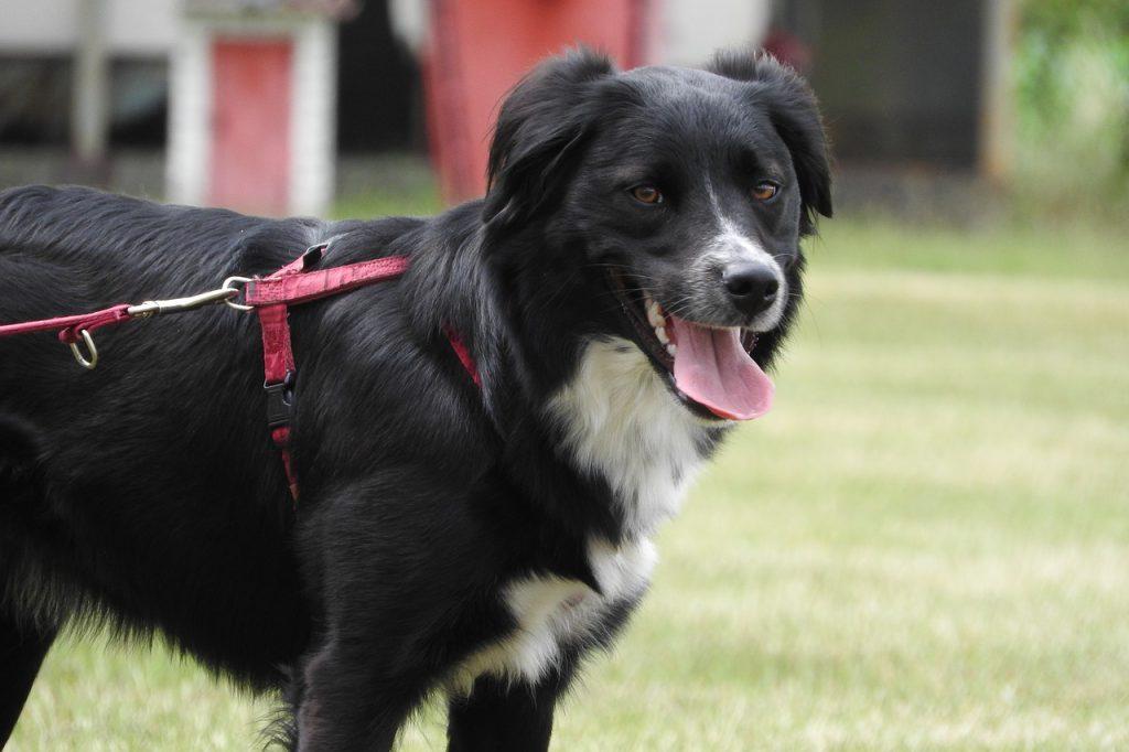 Billig hundförsäkring med bra villkor