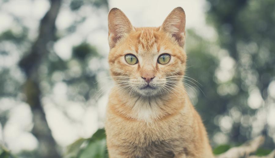 Kattförsäkring pris