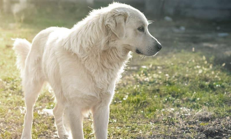 Hundförsäkring pris
