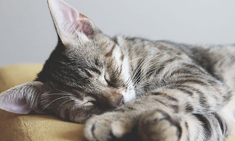 Billigaste kattförsäkringen